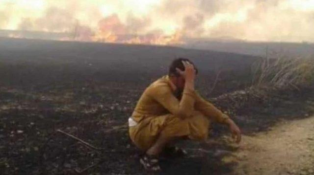 VIVA Militer: Warga Muslim Suriah menangis ladang gandumnya dibakar Amerika.