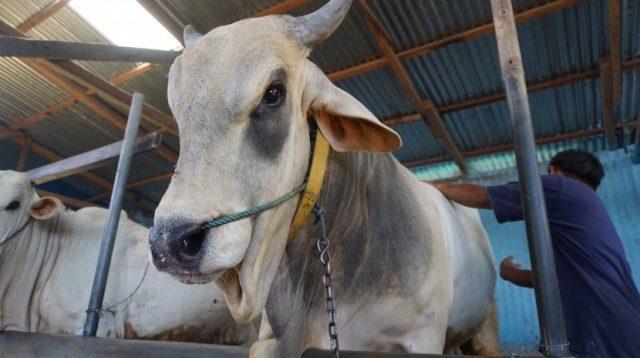 Pemkot Bandung Himbau Warga, Cek Label Sehat Sebelum Beli Hewan Kurban