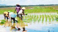 Akhir-akhir ini ramai terjadi polemik impor beras sebanyak 1 juta ton mengalami banyak penolakan di masyarakat. Kementerian Pertanian yang mengurus bagian hulu