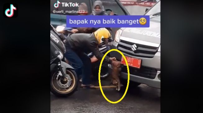 Viral, Demi Selamatkan Kucing, Pemotor Nekat Hadang Ambulans