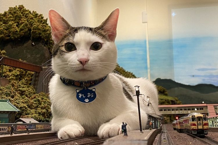 Berkah Foto Kucing yang Viral, Restoran di Jepang Tidak Jadi Tutup Permanen